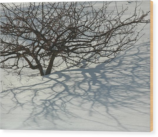 Shadow Play Wood Print by Juergen Roth