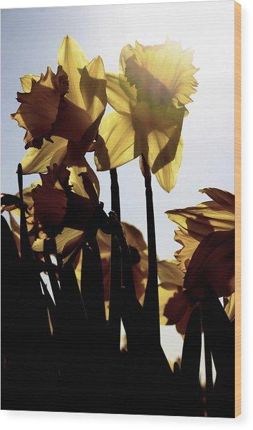 Shadowed Daffodils Wood Print by Karla DeCamp