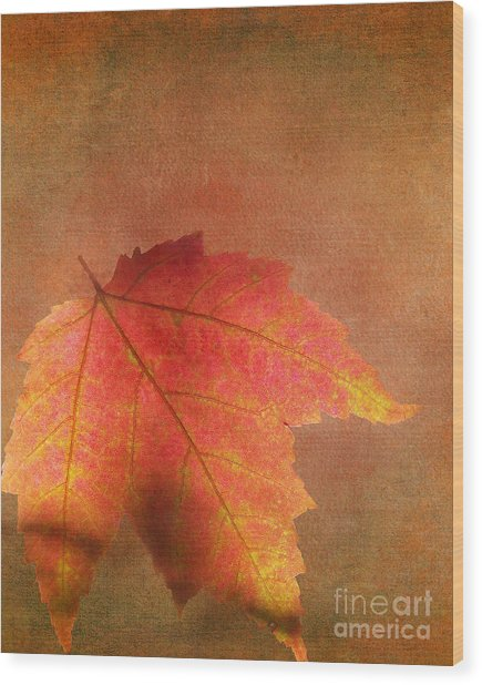Shadows Over Maple Leaf Wood Print