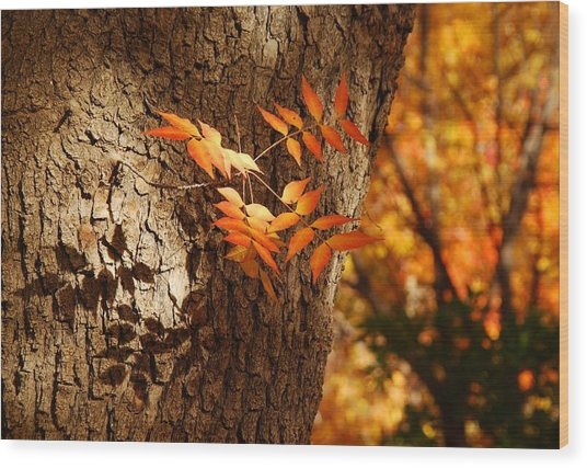 Fall Color Wood Print
