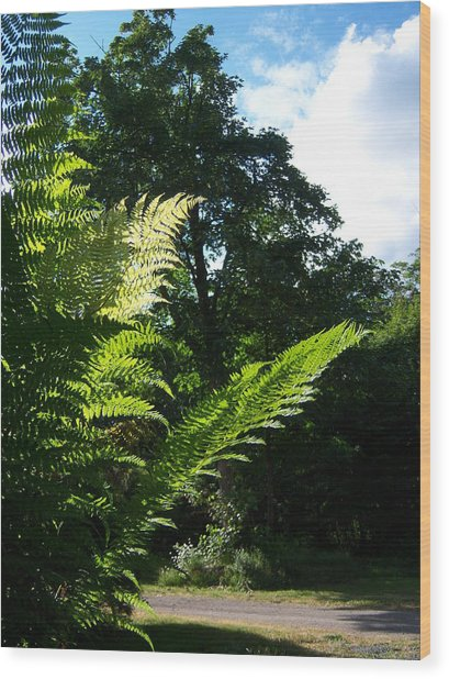 Shads Of Green Wood Print by Ken Day