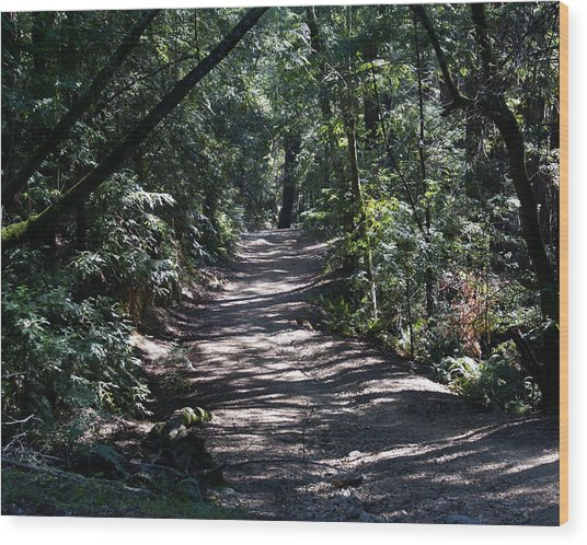 Shady Road On Mt Tamalpais Wood Print