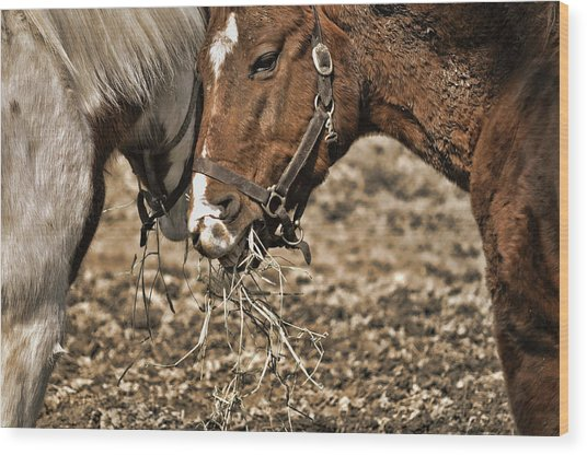 Sharing The Hay Wood Print by JAMART Photography