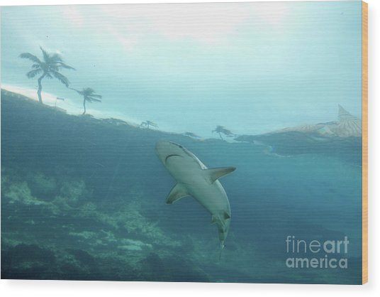 Wood Print featuring the photograph Shark Attack by Wilko Van de Kamp