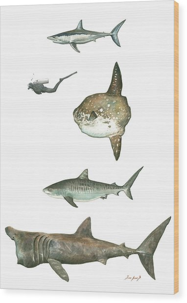 Sharks And Mola Mola Wood Print