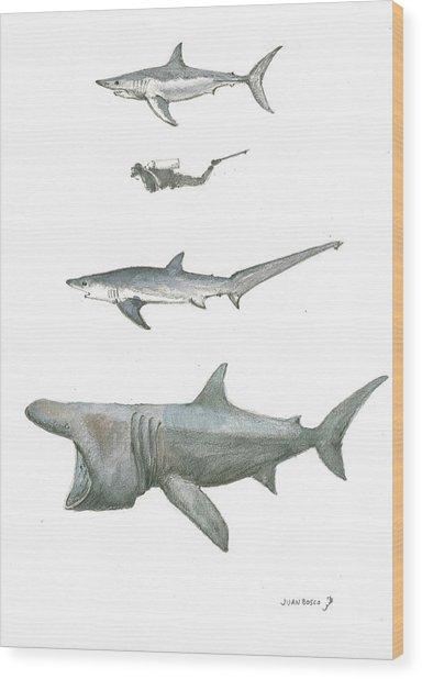 Sharks In The Deep Ocean Wood Print
