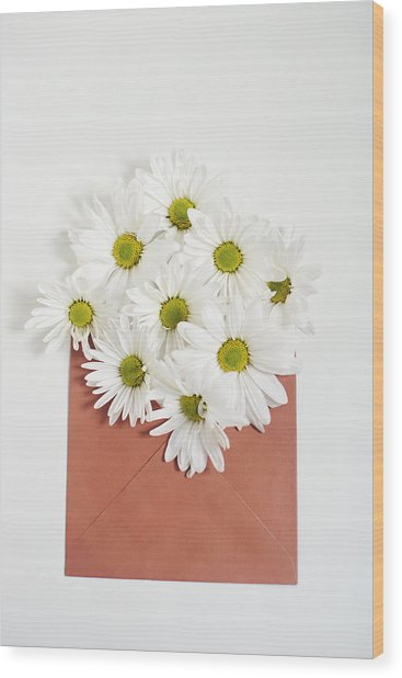 Shasta Daisies In Orange Envelope Wood Print