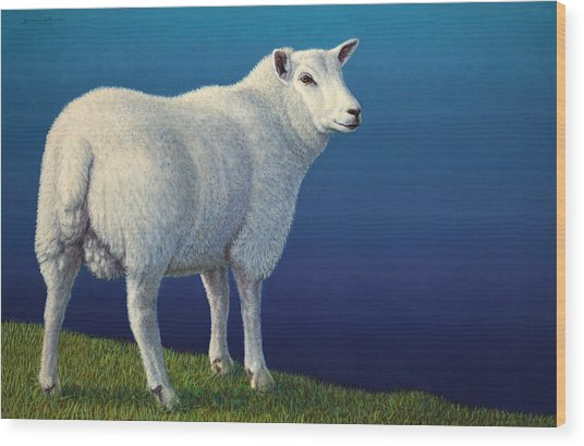 Sheep At The Edge Wood Print