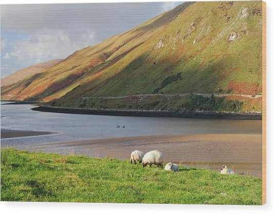 Sheep Grazing In Connemara Ireland Wood Print by Pierre Leclerc Photography