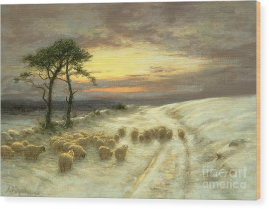 Sheep In The Snow Wood Print