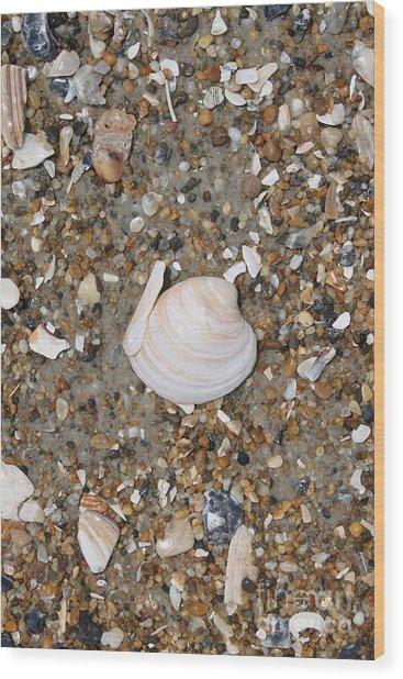 Shell 1 Wood Print by Marcie Daniels