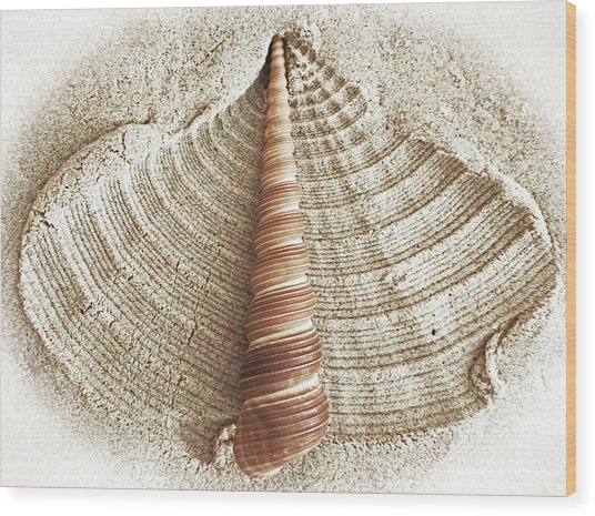 Shell In The Sand Wood Print