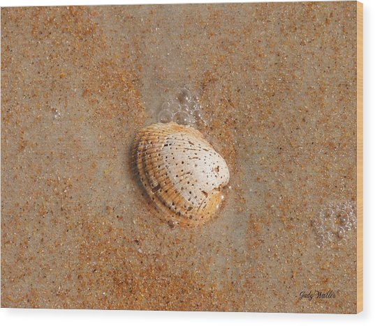 Shell Wood Print by Judy  Waller