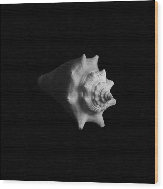Shell No. 4 Wood Print by Henry Krauzyk