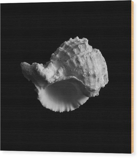 Shell No.3 Wood Print by Henry Krauzyk