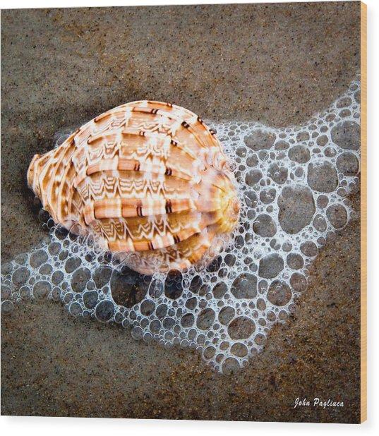 Shell Series No. 4 Wood Print