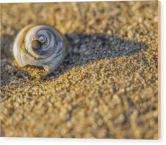 Shell Wood Print by Steve Spiliotopoulos