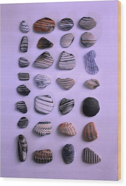 Sea Shell Treasures #1 Wood Print