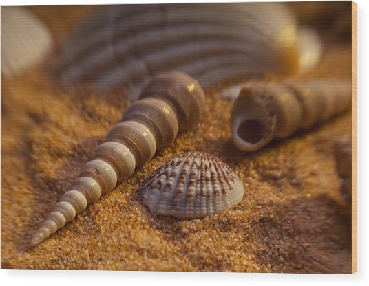 Shells Wood Print by Anthony Towers