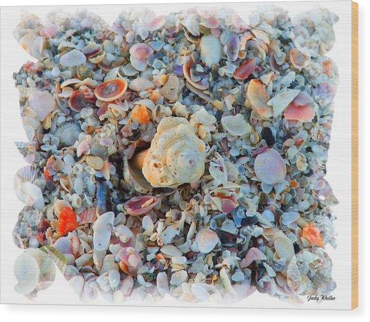 Shells Wood Print by Judy  Waller