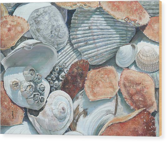 Shells Of The Puget Sound Wood Print