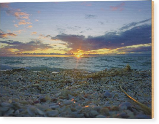 Shells On The Beach At Sunset Wood Print