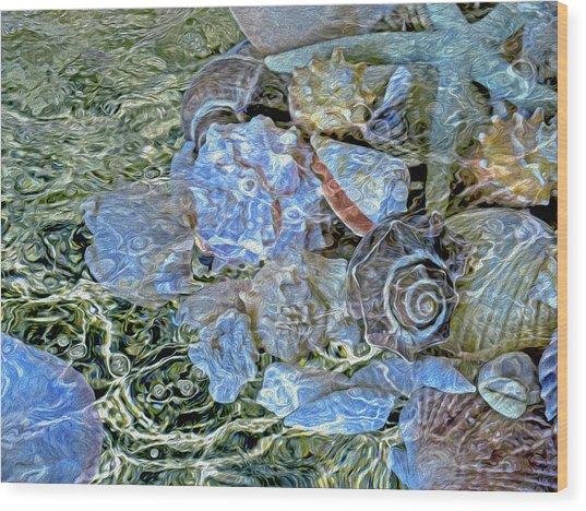 Shells Underwater 20 Wood Print