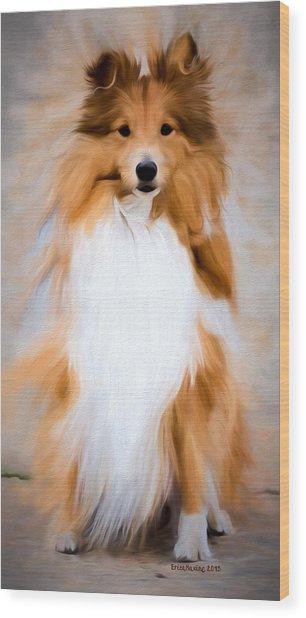 Shetland Sheepdog - Sheltie Wood Print
