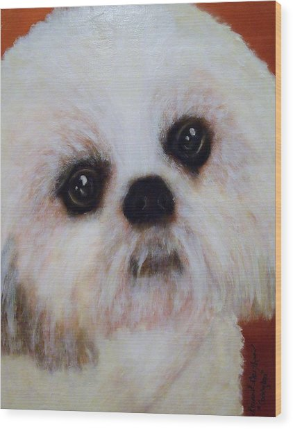 Shih-tzu - Caddy Mo Wood Print