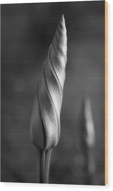 Shimmering Moonflower Bud Wood Print