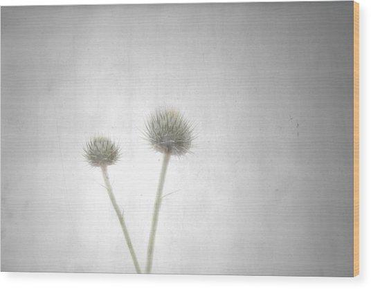 Shine Wood Print