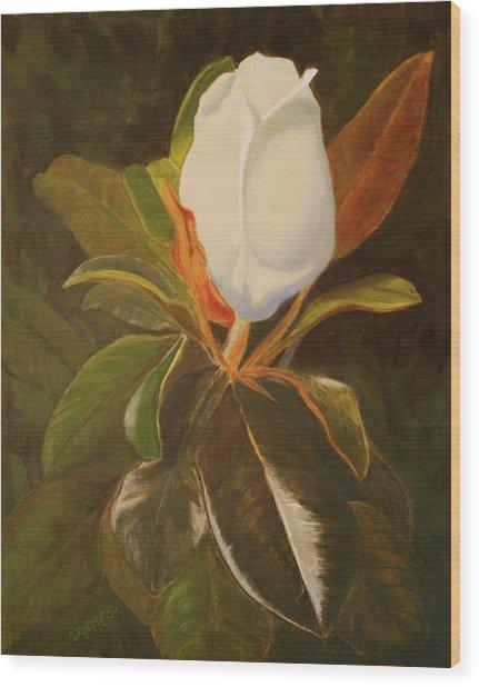 Shining Magnolia Wood Print
