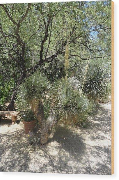 Shooting Up Cactus Garden Wood Print