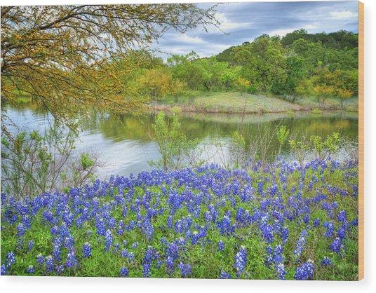 Shoreline Bluebonnets At Lake Travis Wood Print