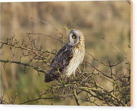 Short-eared Owl In Tree Wood Print