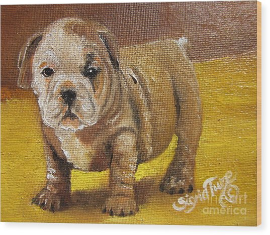 Chloe The   Flying Lamb Productions      Shortstop The English Bulldog Pup Wood Print