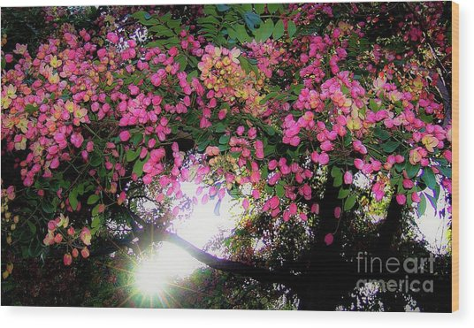 Wood Print featuring the photograph Shower Tree Flowers And Hawaii Sunset by D Davila