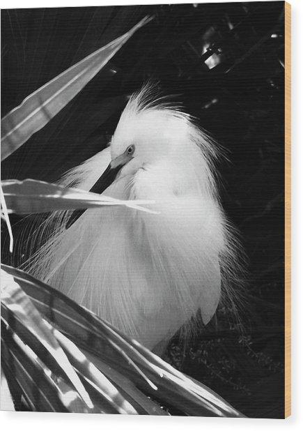 Shy Snowy Egret Wood Print