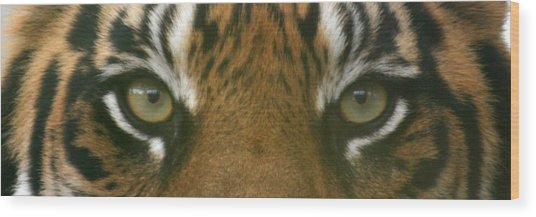 Siberian Eyes - Tiger Wood Print