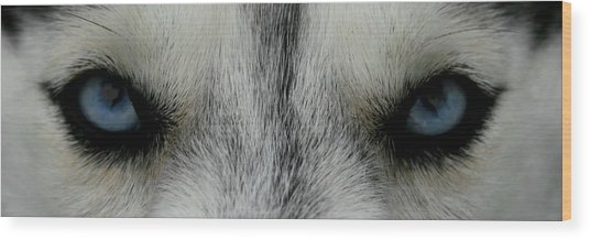 Siberian Eyes Wood Print