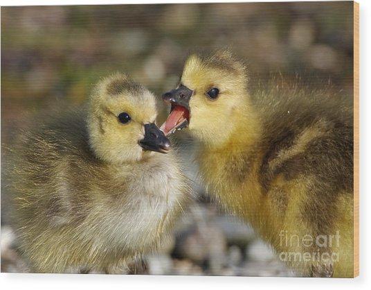 Sibling Love - Baby Canada Geese Wood Print
