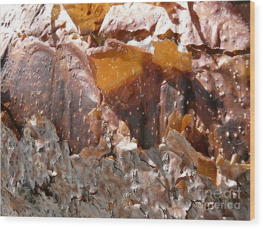 Sienna Serenade Wood Print by Donna McLarty