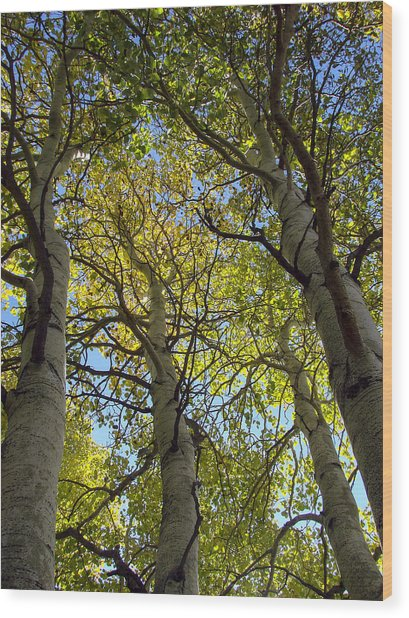 Sierra Nevada Aspen Fall Color Wood Print