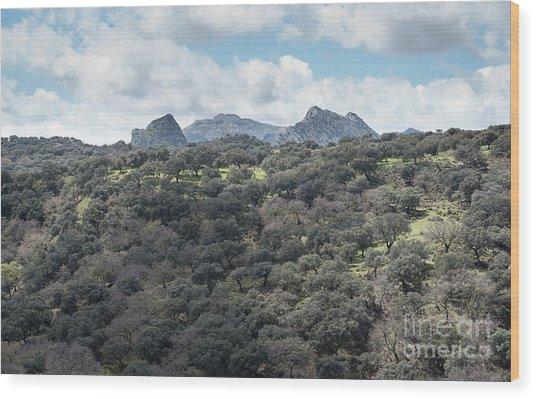 Sierra Ronda, Andalucia Spain Wood Print