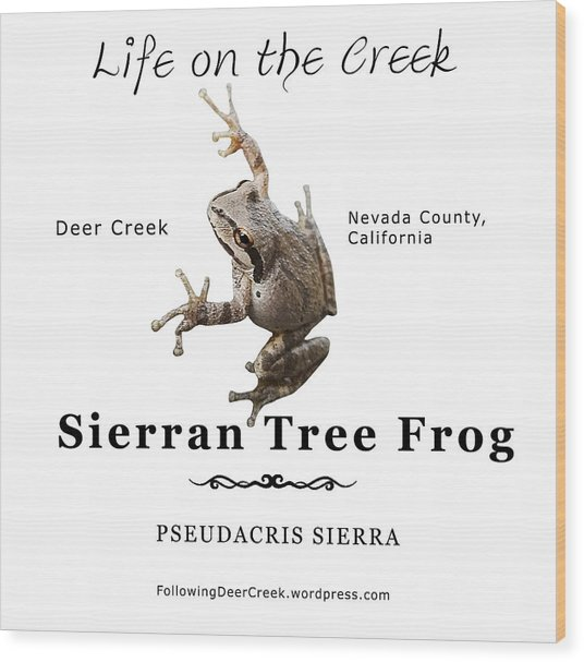 Sierran Tree Frog - Photo Frog, Black Text Wood Print
