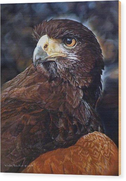 Sig The Harris Hawk Wood Print