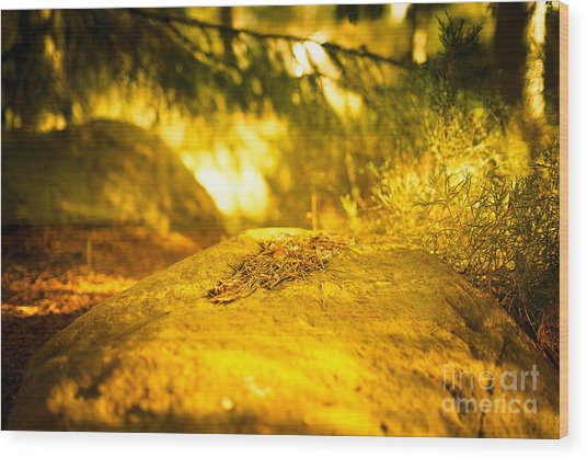 Silence And Peace Under The Spruce Trees Wood Print