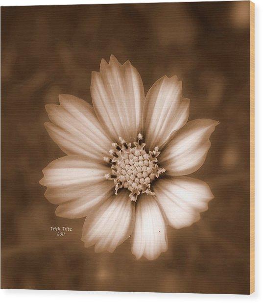 Silent Petals Wood Print