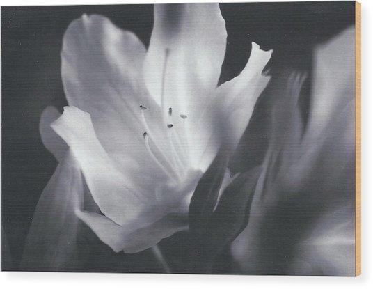 Silent Whisper Wood Print