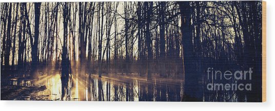Silent Woods No 4 Wood Print